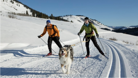 Wacky winter sports