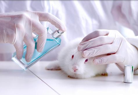 Save Ralph: An exposé of animal testing